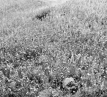 Meadow by Walter Quirtmair