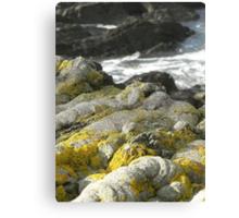 Rocks and Plant Life Canvas Print