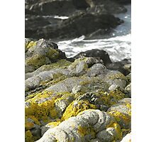 Rocks and Plant Life Photographic Print