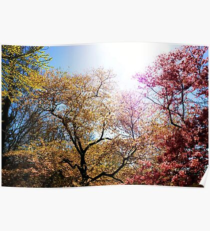 The Grandest of Dreams - Cherry Blosssoms - Brooklyn Botanic Garden Poster