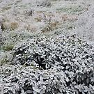 UN PARTICOLARE DEL GELO....... a detail of frost......italy... by Guendalyn