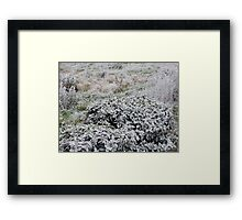 UN PARTICOLARE DEL GELO....... a detail of frost......italy... Framed Print