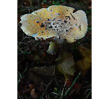 Mushroom Kingdom (1324) Photographic Print