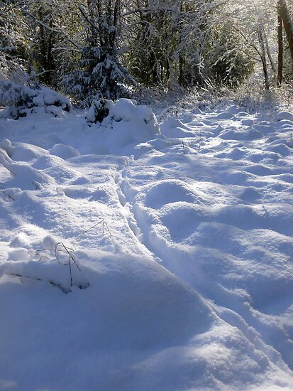 Deer Tracks in Fresh Snow by Elaine Bawden