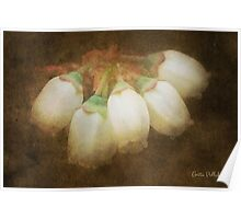 Antique Blueberry Flowers Poster