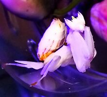 Bell the Orchid Mantis under her Night Light! by Michaela1991