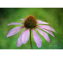 Grunge Coneflower Photographic Print
