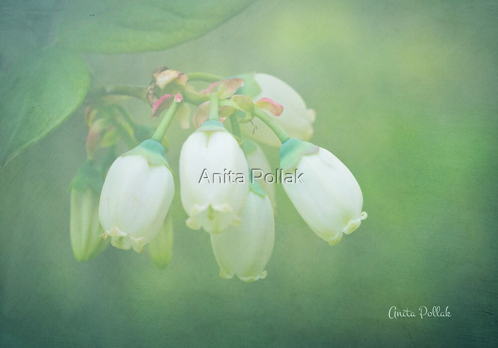 Misty Blueberry Flowers by Anita Pollak
