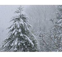 It's Snowing Photographic Print