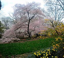 Central Park in Spring 3 by ShaneWells