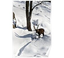 Ibex Itinerary Poster