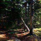 Ship Harbor Woods, Acadia National Park - Maine by Jason Heritage