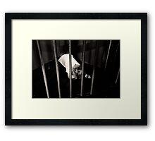 Child behind bars  Framed Print