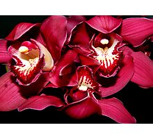Birthday Orchids - 1  ^ Photographic Print