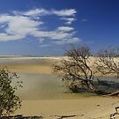 Trees on The Shore by Terry Everson