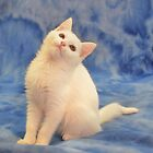 Kitty Pose by lorib