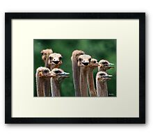I SAY NO 6! - AT THE OSTRICH RACE - Struthio camelus Framed Print