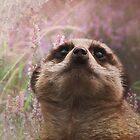 Meerkat Dream by Carol Bleasdale
