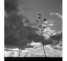 Sonoran Desert Sunset Photographic Print