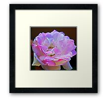 Pink Touch Framed Print