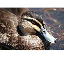 """Duck"" Photographic Print"