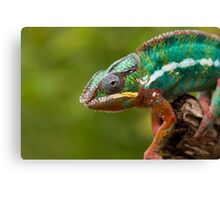 Chameleon on the prowl Canvas Print