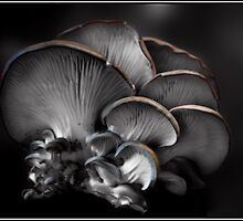 The Color of Fungi by Wayne King