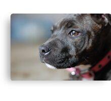 English Staffy Pup Canvas Print