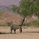 Desert Elephant - Namibia by Austin Stevens