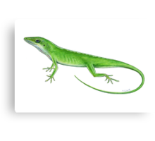 Green Anole Lizard Canvas Print