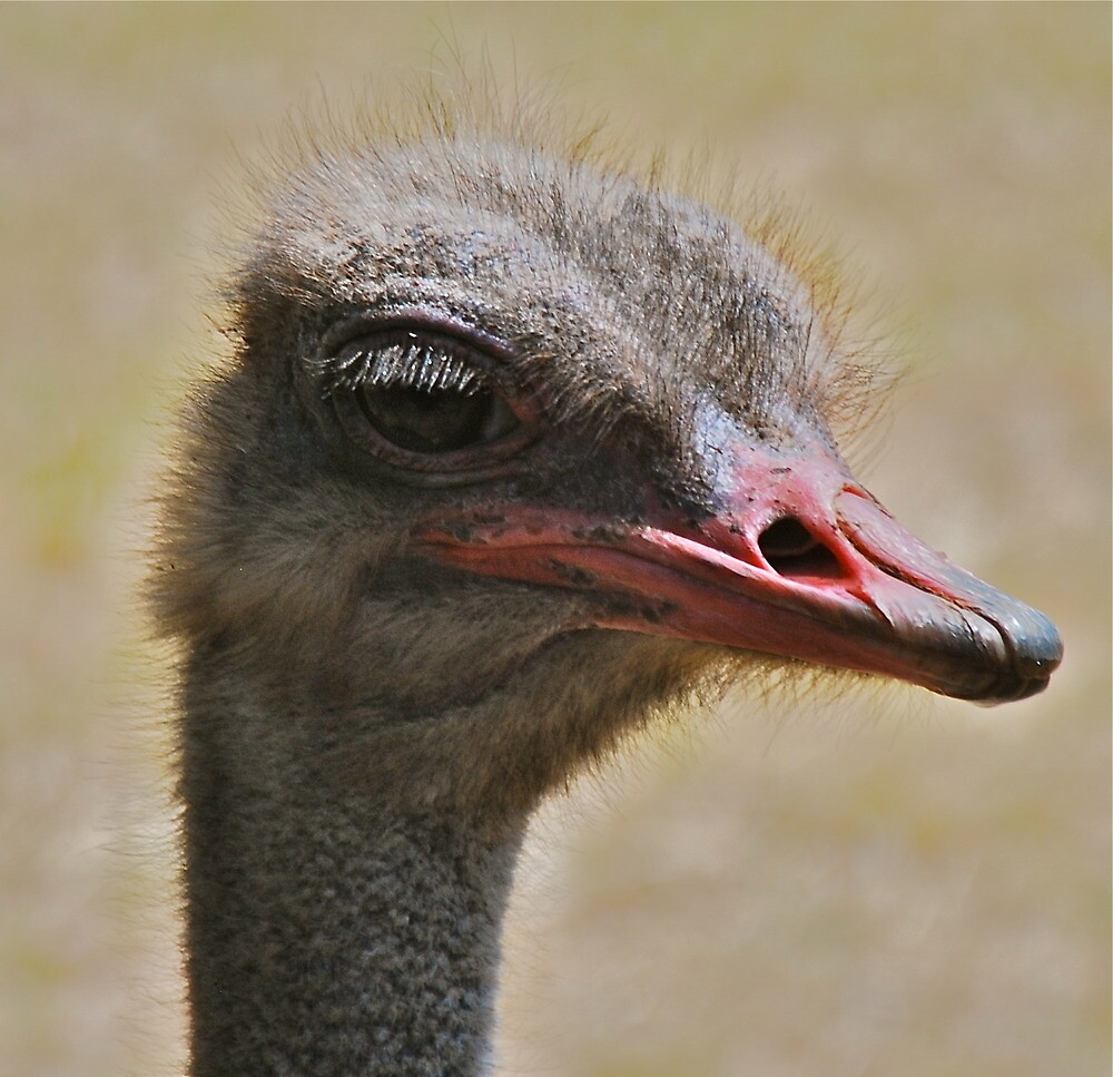 Obstreperous Ostrich by peasticks