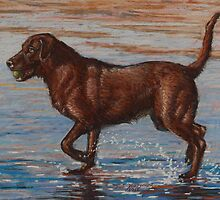 Chocolate Labrador Retriever  by Sue Deutscher