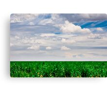 Young Cornfield Canvas Print
