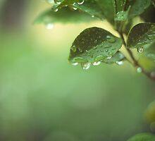 silent falling rain by Caterina Neri