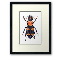 American Burying Beetle Framed Print