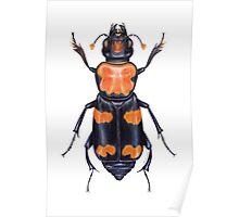 American Burying Beetle Poster