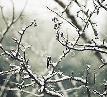 winter wonderland by Caterina Neri