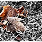 Colour in the Frost by Harry Purves