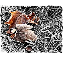 Colour in the Frost Photographic Print