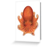 Northern Octopus (Eledone cirrhosa) Greeting Card