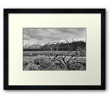 Brush at the Base - Colorado Framed Print