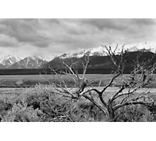 Brush at the Base - Colorado Photographic Print