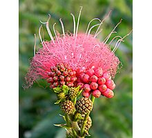 Freaky Flower Photographic Print