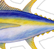Yellowfin Tuna (Thunnus albacares) Sticker