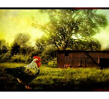 A rooster in a farmyard as dawn breaks by Mal Bray