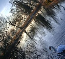 Swan on the Mole by Guy Carpenter