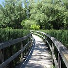 Unionville Boardwalk by Jeanette Muhr