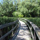 Unionville Boardwalk by Jeanette Muhr