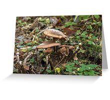 toadstool Family Greeting Card