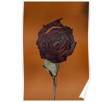 Dead rose Poster